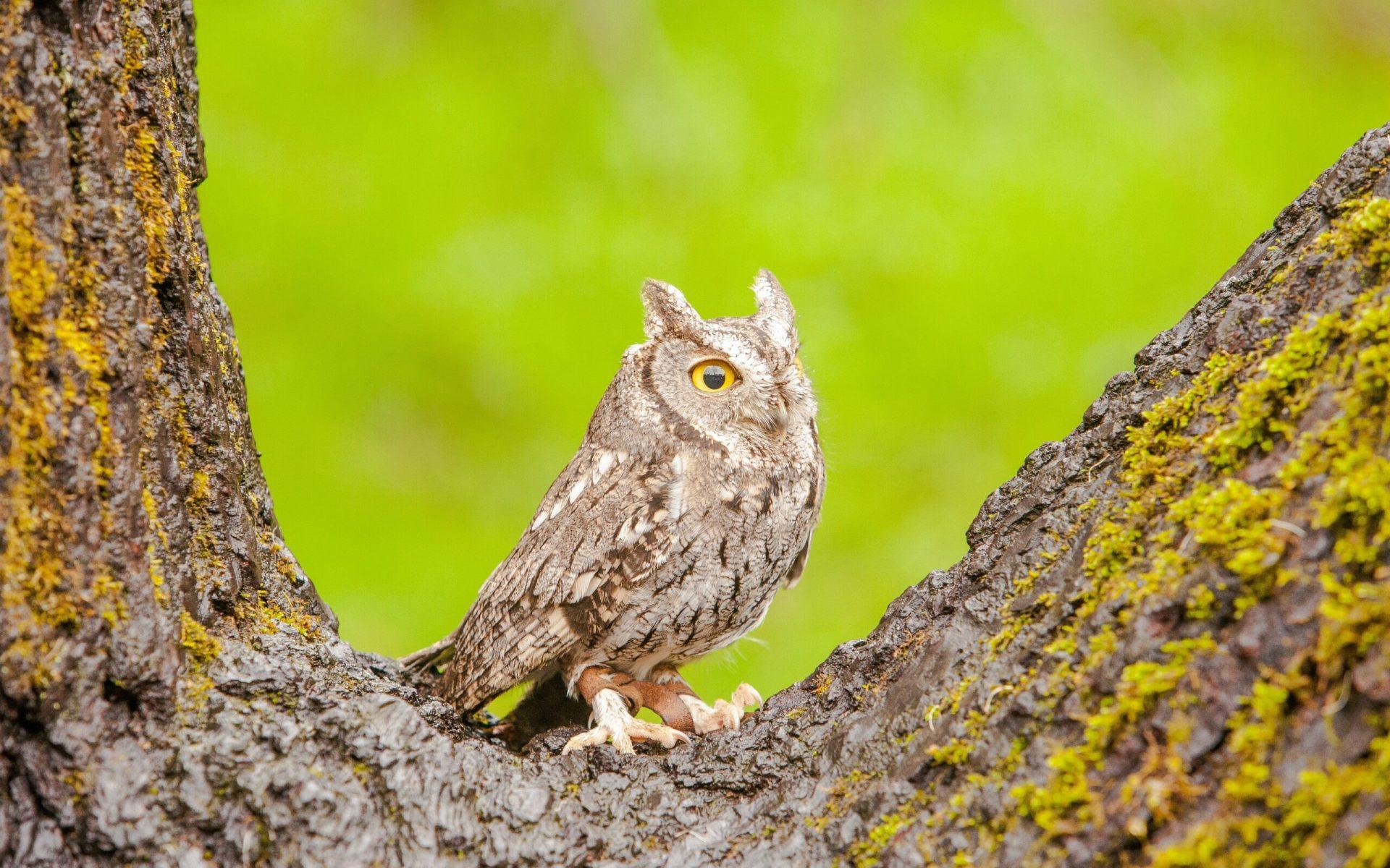 gray owl on tree